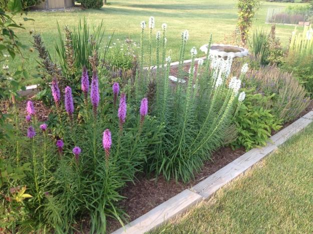 My clothesline flower garden in Wisconsin.