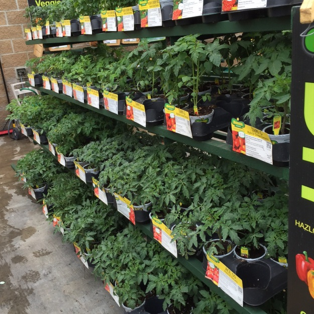 Oodles of tomato plants now can be found at local stores, a sure sign spring gardening is just around the corner.