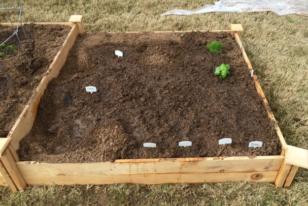 This 4x4 bed has cucumbers, onions, chives and basil.