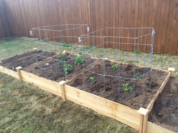 It only took about 90 minutes to even the dirt, plant all the veggies, cage the tomatoes and water the new plantings.