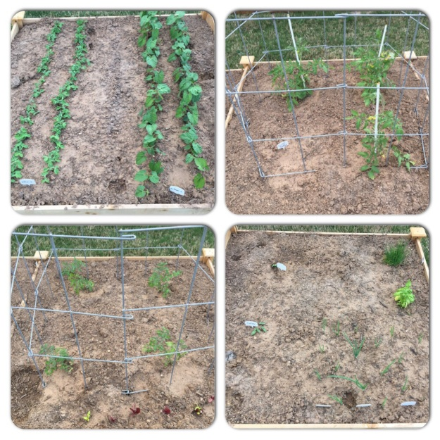 The four raised beds that make up the vegetable garden on April 3.