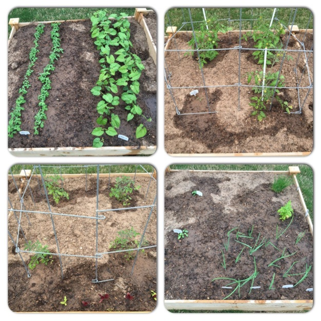 The four individual sections of my raised garden bed on April 8.