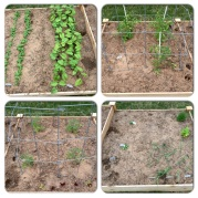 The four sections of the raised garden bed on April 9.