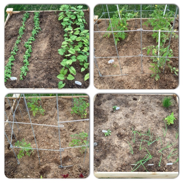 The four sections of my raised garden bed on April 10.