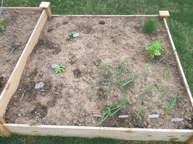 Cucumbers, onions, basil and chives.