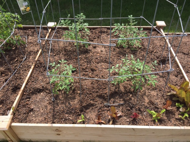 Cherry tomatoes and some lettuce.