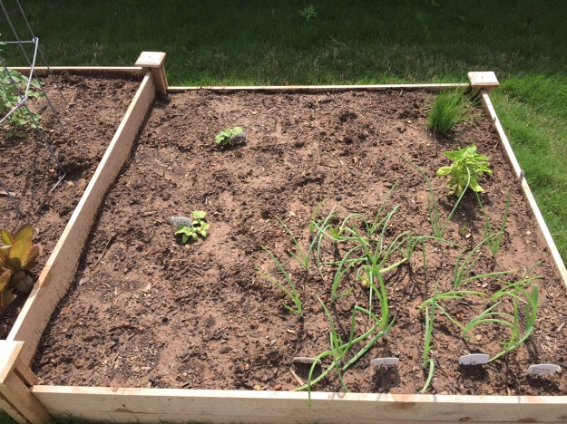 Cucumbers, onions, chives and basil.