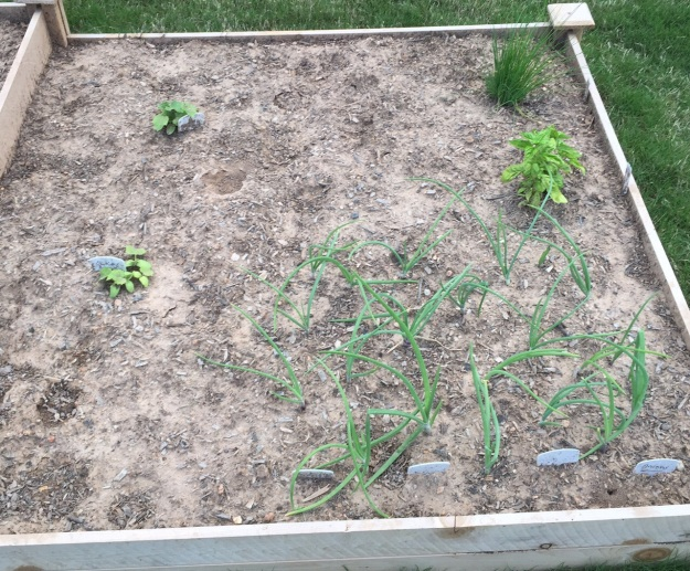 Onions, cucumbers, basil and chives.