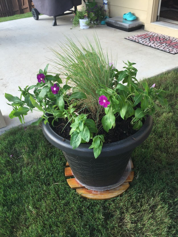 Purple and pink vincas have replaced the petunias in this container.