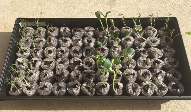 Day 5: The seedlings.