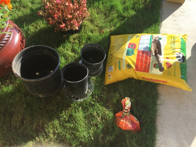 Several saved flower containers will be recycled as temporary homes for the pumpkins.