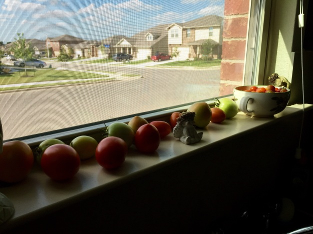 Tomatoes on the kitchen windowsill.