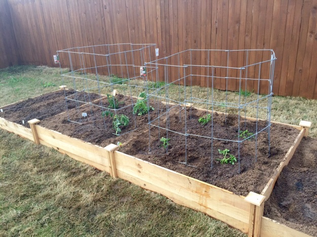 My garden in raised beds in late March.
